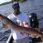 40.5 inch Lake Vermilion northern