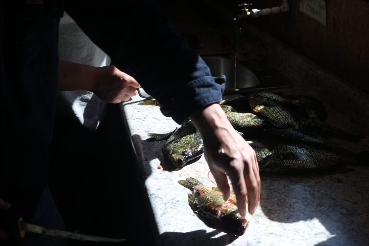 cleaning crappies Lake Vermilion
