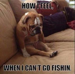 dognotfishing