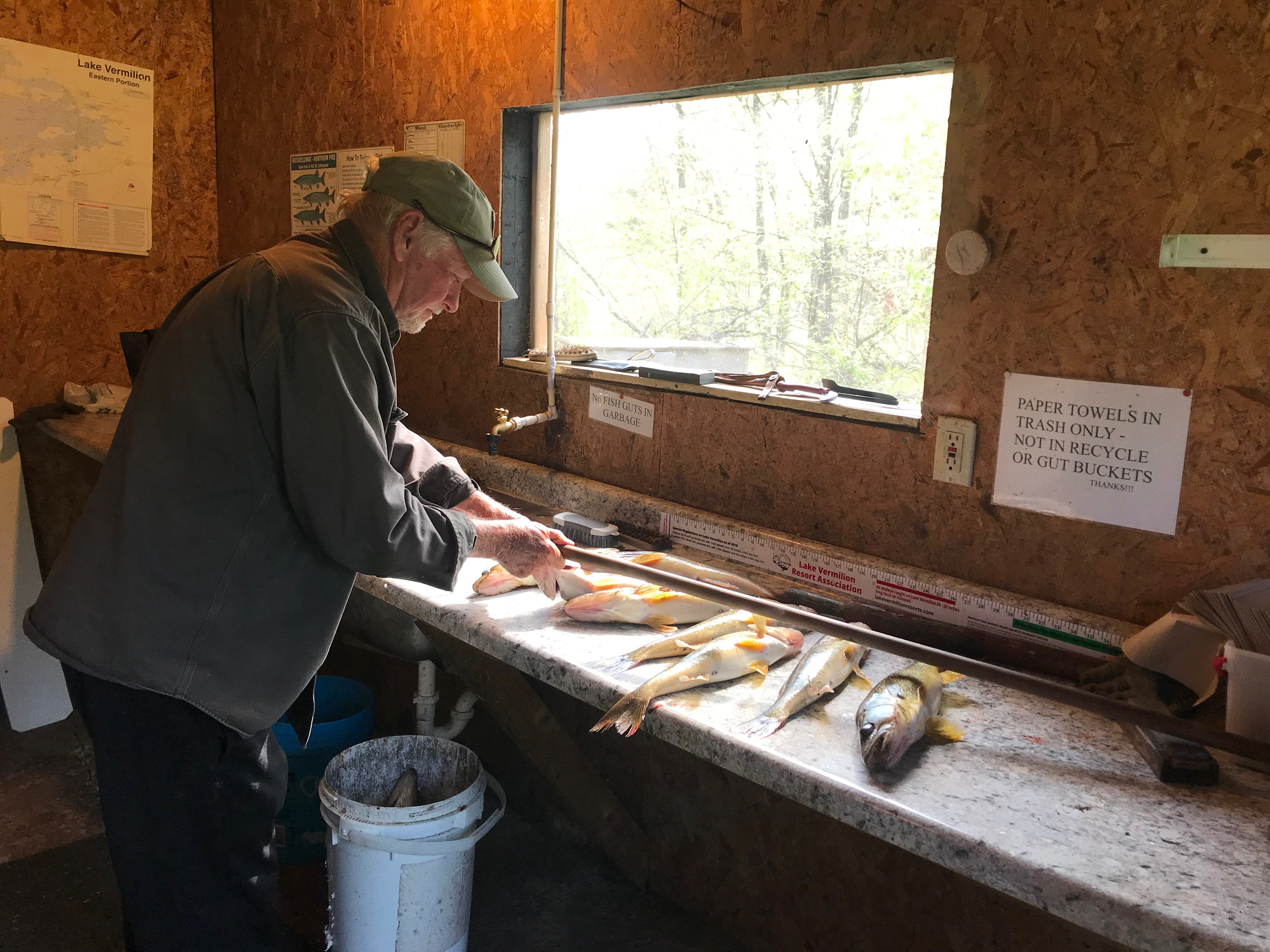 Man cleaning walleyes at Everett Bay Lodge